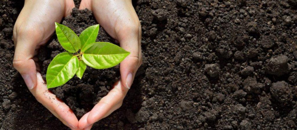 Soil-top-view-plant